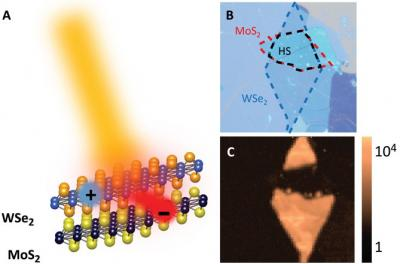 Ultrafast charge transfer process in the WSe2/MoS2 heterostructure